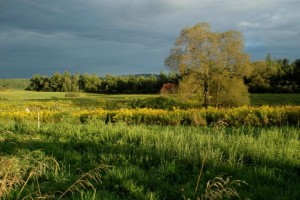 My hayfield in beautiful light